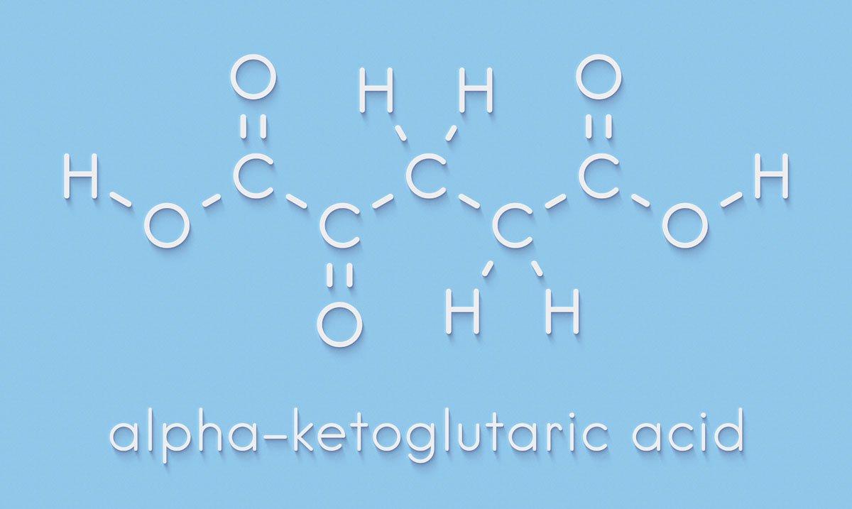ornitina e alfa-chetoglutarato
