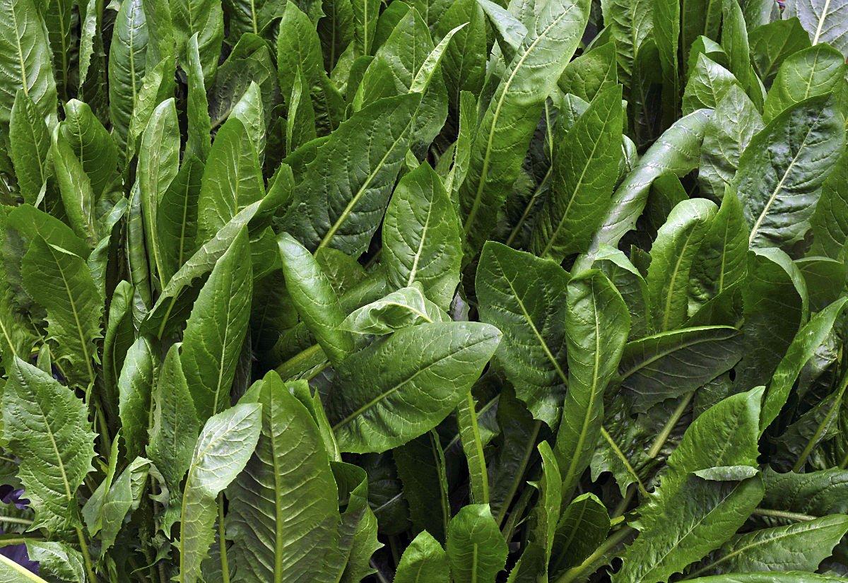 frutto-oligosaccaridi